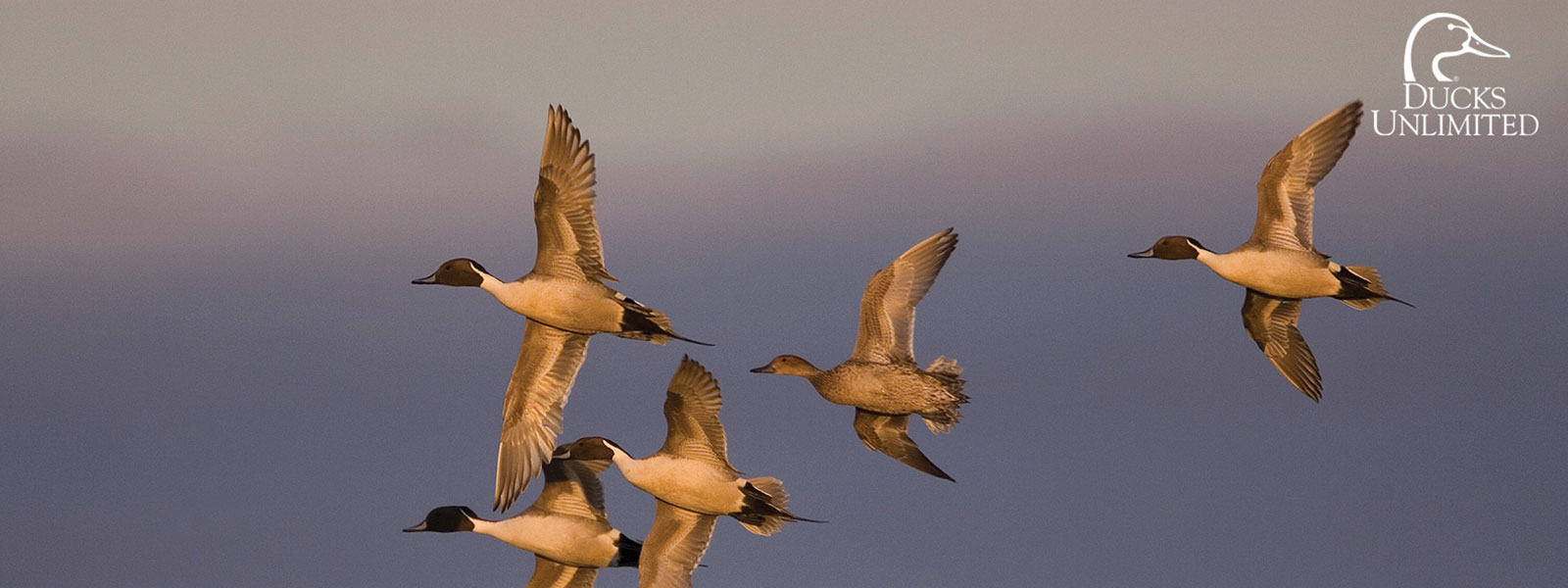 Flint Hills Resources Donates $65,000 To Protect Waterfowl Habitat