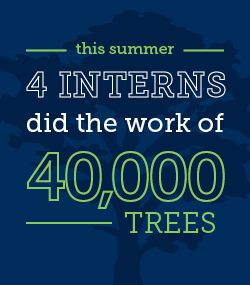 Intern_Innovation_Challenge_TreeGraphic3.jpg