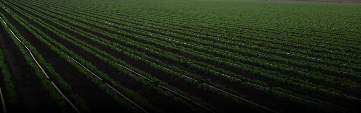 Image of a nitrogen fertilizer stabilized field.